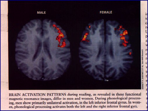 How Male/Female Is Your Brain?