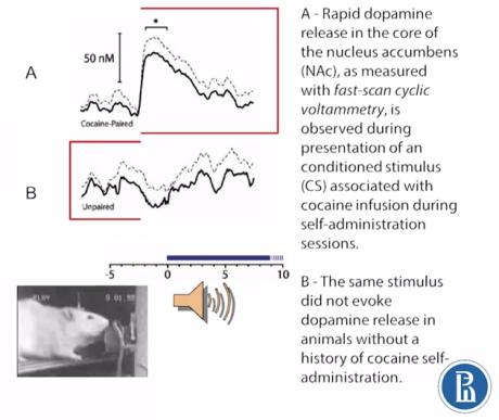 dopamine cocaine study