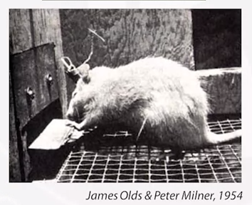 dopamine rat study
